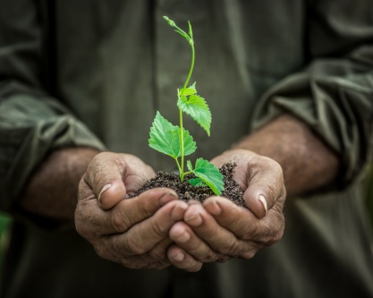 Young plant in old hands against green background